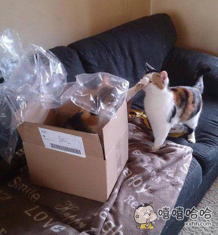 """""""走开,这是我的箱子。"""""""