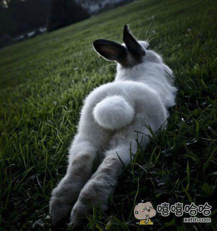 如此妖娆性感的兔女郎