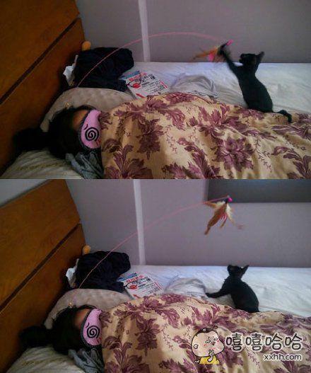 台湾网友领养了一只特别爱玩的小猫,所以头上要插上逗猫棒才能睡得安心