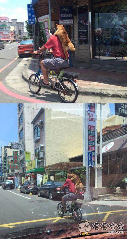 台湾一网友在路上拍到一男子骑着自行车,后背上还趴着一只狗狗,据附近的居民说这个人经常这样载着狗狗出门,甚至指一下肩膀狗狗就会自己跳上去,有点萌!