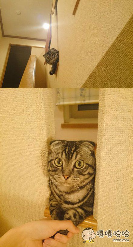 一位网友表示在家下楼梯的时候总有一个小可爱等着跟你握手!!