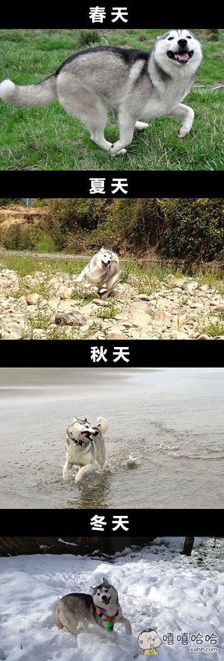 做一条快乐的单身狗