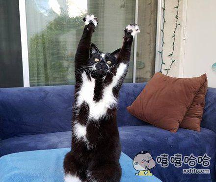 快点给我猫粮啊!!