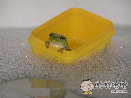 一个蛙的星辰大海