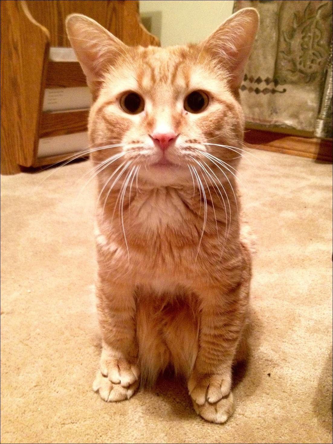 一个网友表示是不是只有他家这只猫才喜欢这么站着。。。