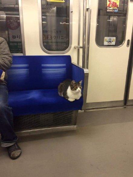 一小哥从东京池袋站上地铁,这大兄弟也跟着上来,找个座舒舒服服坐下了……一看就是喝到半夜坐车回家的老不正经