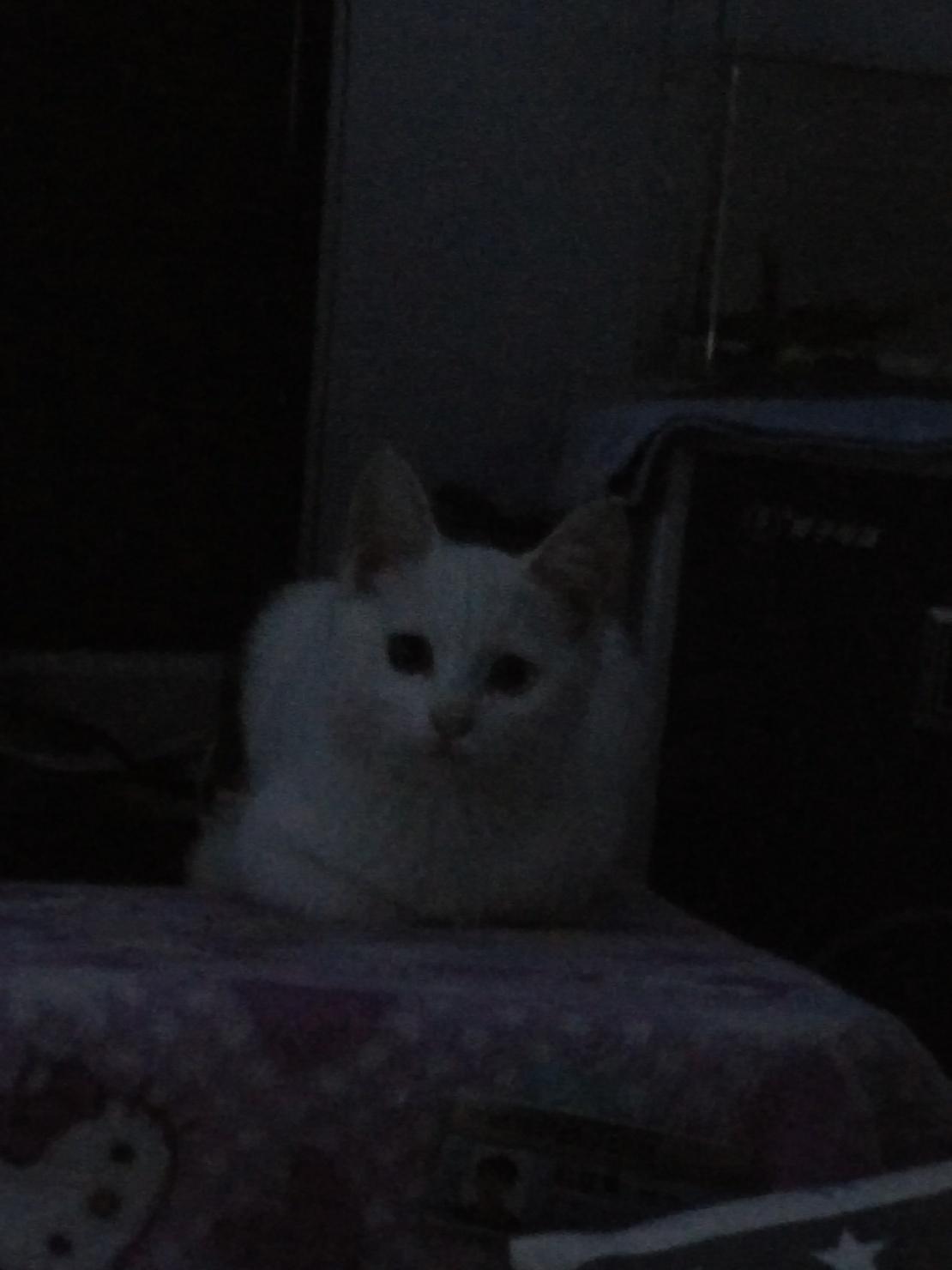 我家猫星人午夜盯着我,表示吓尿了,是不是把我当大老鼠了╭(°A°`)╮