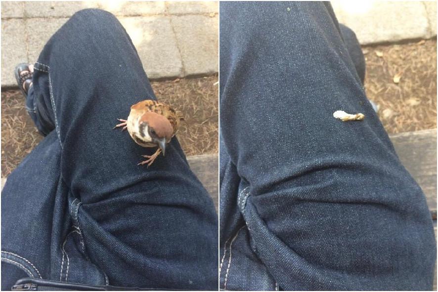 一小哥在公园闲坐,一只萌萌的小雀飞过来趴在了腿上..真是好暖