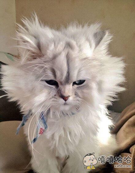 每次头发还没干就睡觉了,早上醒来后就变成了这个样子!