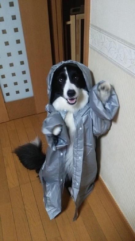 一位主人给狗狗穿上了儿童雨衣,顿时嘻哈范儿就出来了