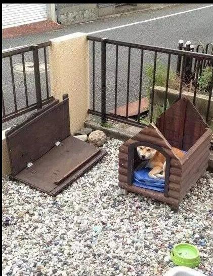 """日本九州昨天被台风吹袭,一只无辜的柴柴受到台风的影响,他家的屋顶被强风吹翻,但柴柴依旧坚持留在家里……柴柴:""""朕要留守在宫里到最後一刻!"""""""