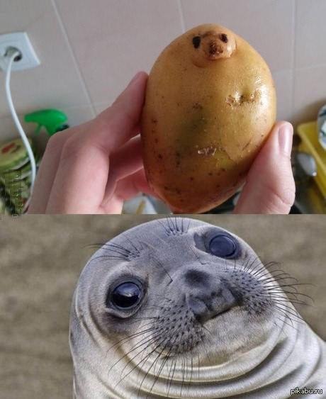 网友RealMayer 准备拿起土豆准备做饭的时候,发现了一个真相