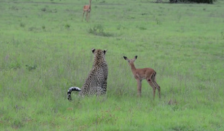 """""""你妈跟你喊啥呢?"""" """"我咋知道""""。鹿卒。。"""