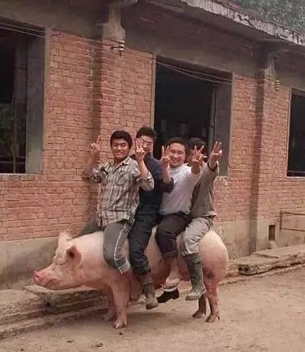你们考虑过猪的感受吗啊