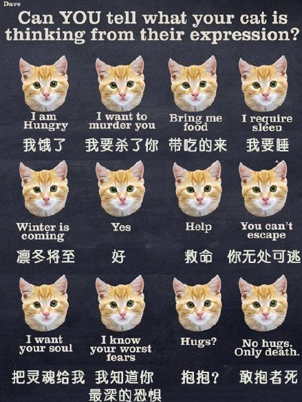 """看到一个简单易懂的""""试分析你家猫的表情,能看透吗?""""哈哈哈"""