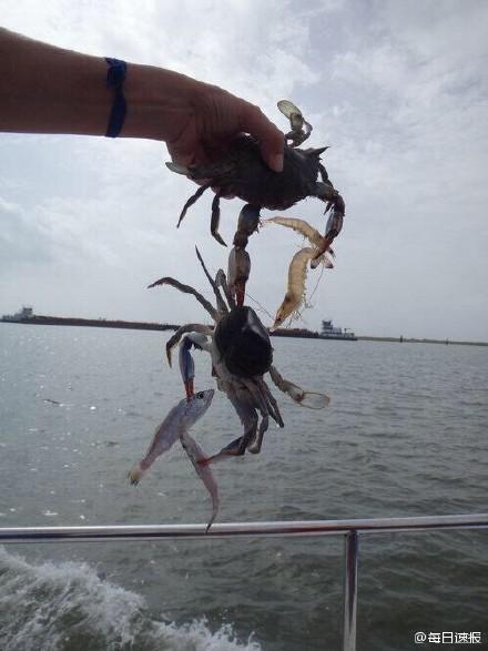 一岛国少年抓住了一只螃蟹,这个螃蟹抓住了两个虾和一只螃蟹,同时第二个螃蟹 抓住了2条鱼......彪悍的人生,神级的人品,锦鲤般的少年!螃蟹:要死大家一起死
