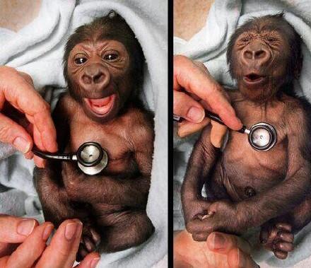 每次身体检查时,被听诊器温度冰到之后的样子。。