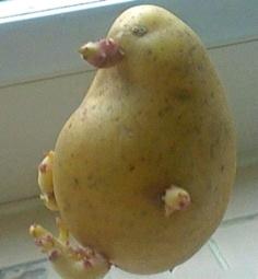 哈哈,这个鸭子投错胎了