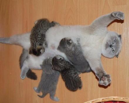 原来奶孩子的猫妈,是这样一脸的生无可恋