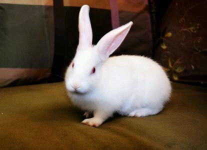 幼稚园老师教侄女一首儿歌 小白兔,白又白,两只耳朵抓起来,割完静脉割动脉,一动不动真可爱。我想杀了那个老师。