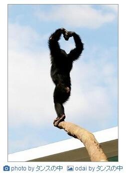 向天空大声的呼喊,说声我爱你……给你最靓的猩猩,说声我想你……