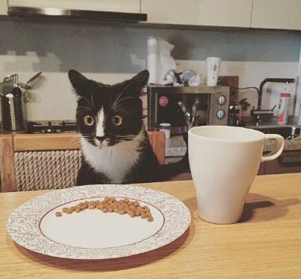 法式猫粮。