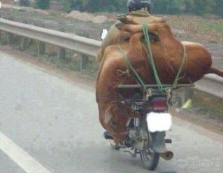 这牛拉的也太牛了。