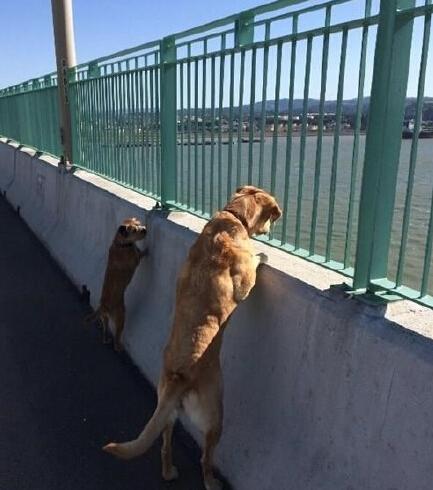 """所谓""""你在桥上看风景,看风景的人(狗)在楼(桥)上看你""""大概如此"""