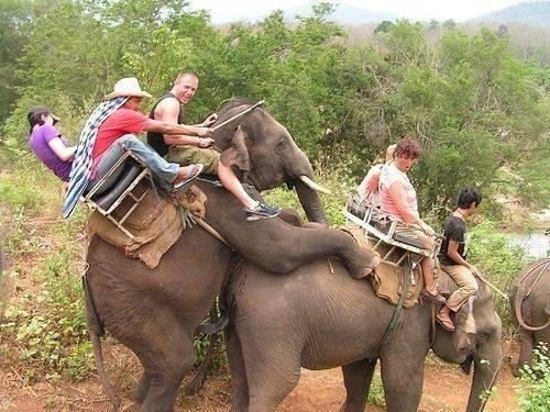 让你骑大象装逼,傻眼了吧…