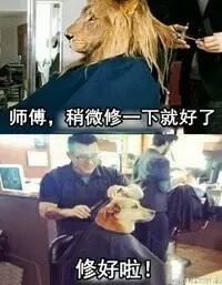 理发师永远都不懂什么是稍微修一下。