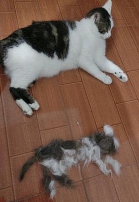 这个主人也是个人才。。 不就是给猫咪褪个毛。。