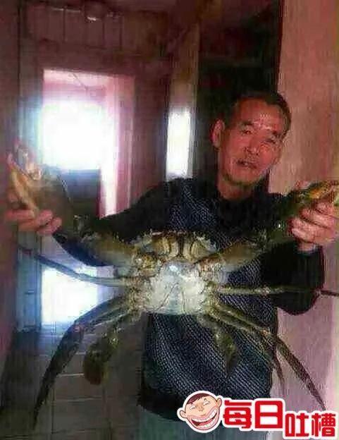 """昨天晚饭前突然有人敲门,我打开门一看,一个送外卖的拿个大螃蟹站在门外。我说:""""你一定是弄错了,我并没有买。""""""""这我知道。""""他说:""""这是你的微信好友让我拿给你看一眼的,这是他今天晚上要吃的美食,他手机坏了,发不 了朋友圈。你快点看,我还得跑十几家呢。"""""""