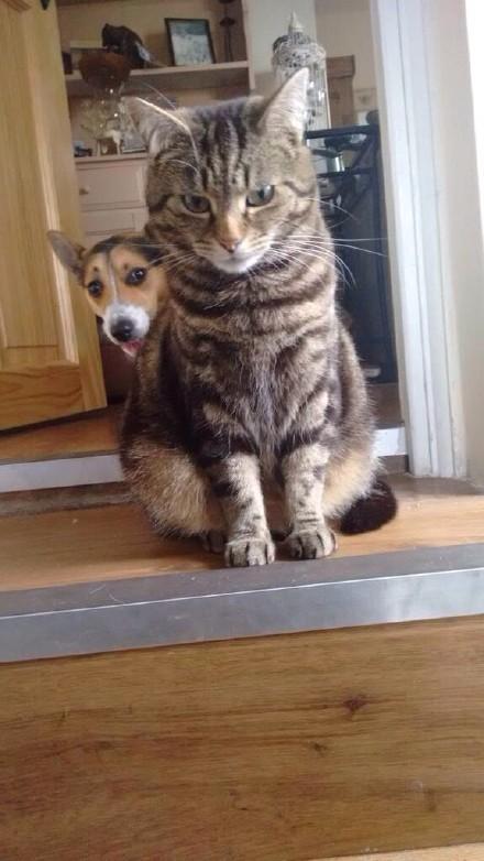狗性格较为亲人、依赖性强,而猫通常很独立。所以许多猫狗混养情况下,当家作主的,都是猫。美国的夏彻•佑布惠斯教授经研究称:如果你欺负一只狗,它掉头就跑,并不代表它对你屈服了,它可能是回家叫猫了……