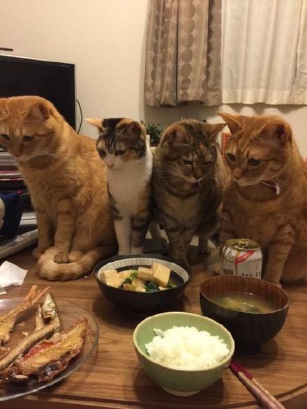 一蜀黍表示,昨晚他半夜肚饿,烧了几只干鱼,然后就这样了...结果他就一直饿着