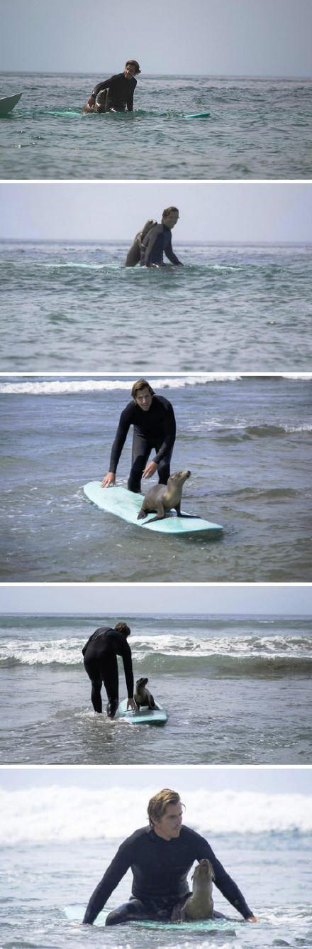 有个哥们在海边冲浪,突然有只海狮爬到了他的冲浪板上。他说那海狮就像个小狗一样对他各种发嗲各种蹭,还趴到他背上跟他一起玩。最后小哥只好陪着海狮玩了1个多小时。他朋友在旁边赶紧拍下了这一切。。超有爱啊。。