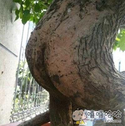 树都成妖了