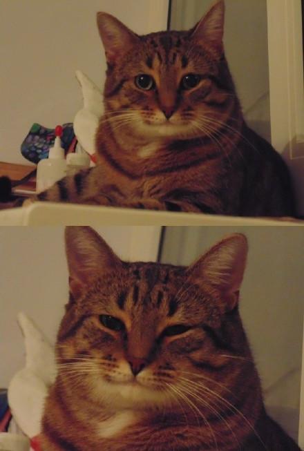 汤上一只猫,其表情温善醇厚,网友们纷纷表示它像家族里某位睿智的长者,还有人说像他慈祥的父亲,反正一看就让人倍感亲切舒服