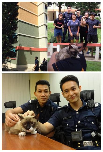新加坡一只喵爬到了一棵6层楼的高树上,不敢下来,猫主人到处打电话,求助了10多个单位,也没人相救,最后还是两个警察帮她救下来了,可是救猫的照片传到网上之后,网友们已经不再关心猫了,都去夸救猫的警察叔叔的脸。。