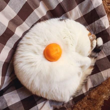 早安,来个煎蛋?