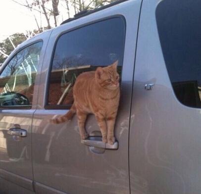 猫真是谜一样的存在。