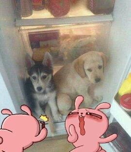 不用钱的空调,狗狗不用担心热了。