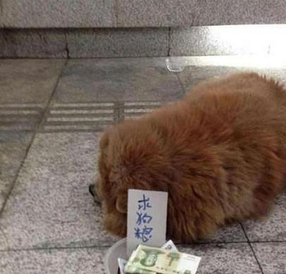狗狗赚钱比人容易啊