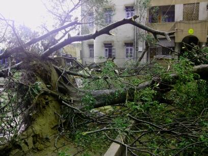 你们说这树砸到你们你们会考上大学的。。。。