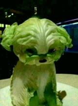 白菜?甘蓝?疙瘩菜?小狗?我不知道!