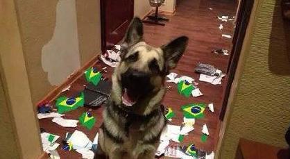 早上看到巴西被爆的消息,仿