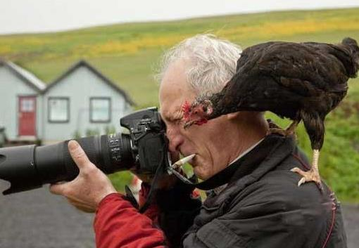 鸡也会摄影 摄影的境界,不是每个人都懂!
