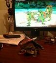 龟子,你要去跟你的同胞在一起了么?