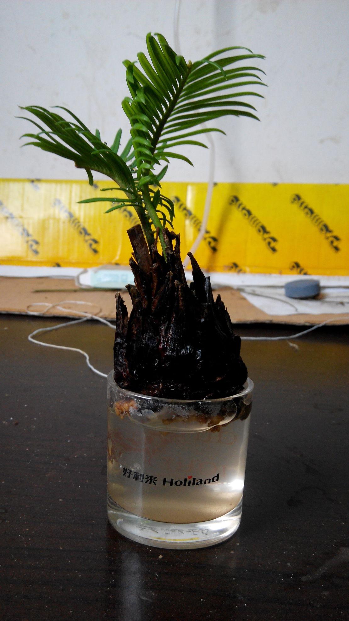 小植物也可以这么种!