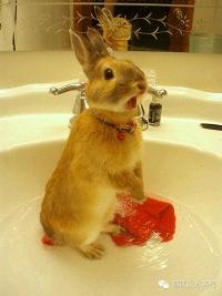 我有一首无名诗,只有我和兔子知,兔子正在读此诗!!!