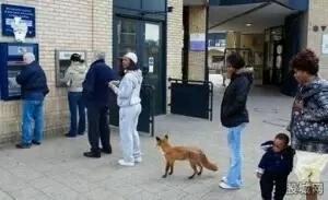 小狐狸取钱图,,,